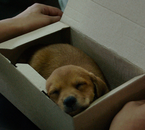 puppy box photo