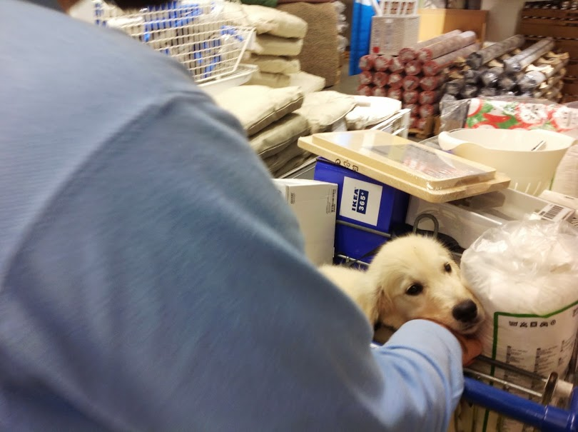 Dog in shop photo