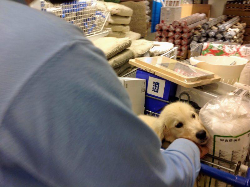 expat dog in Ikea Switzerland travel photo
