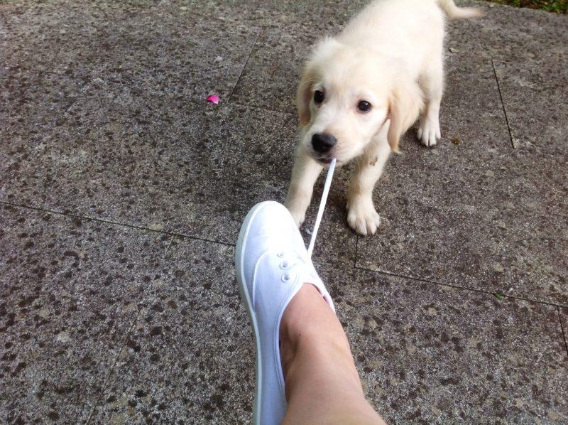 expat dog photo