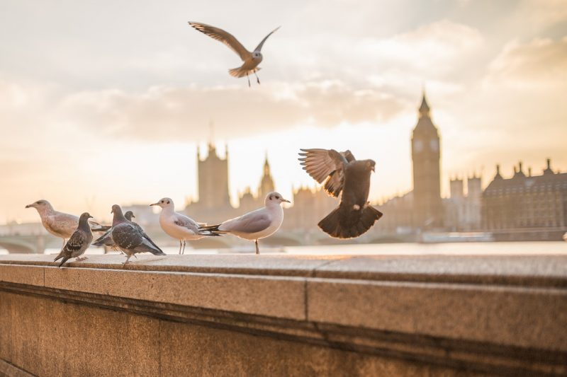 flying the nest in London expat photo