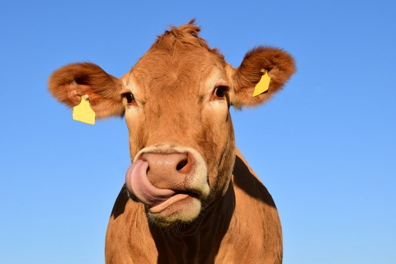 world vegan month dairy photo