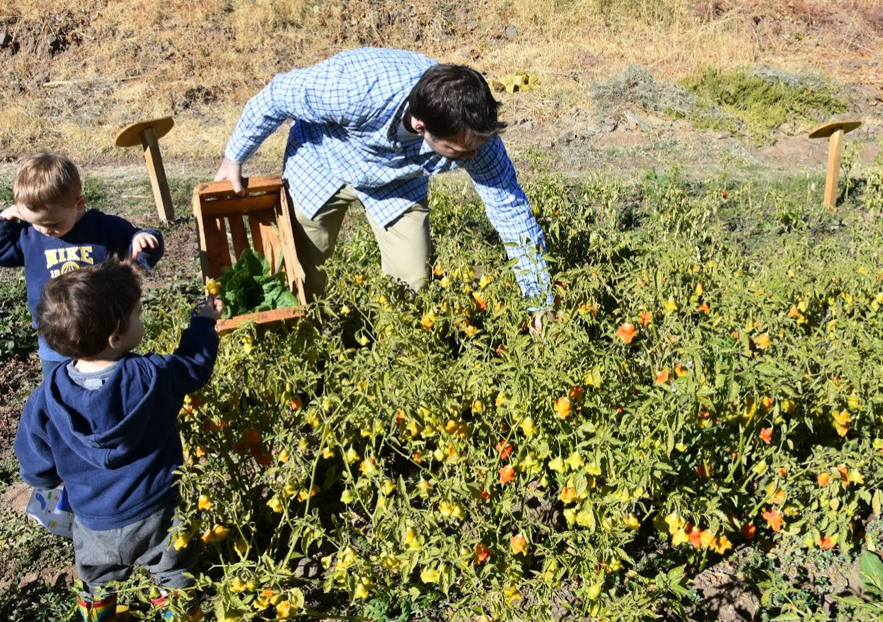 vegetable picking at San Francisco Lodge and Spa