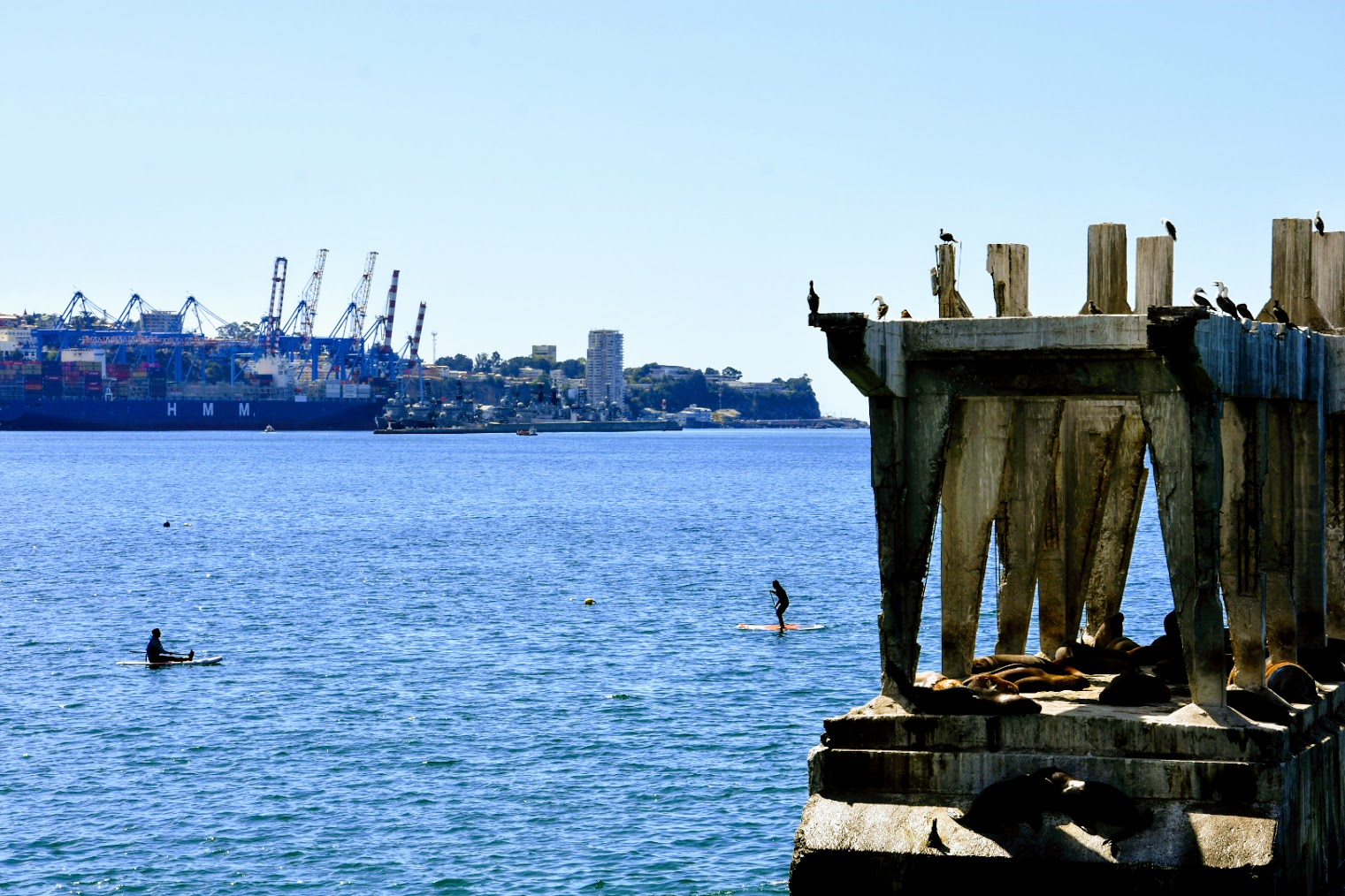 valparaiso sea lions