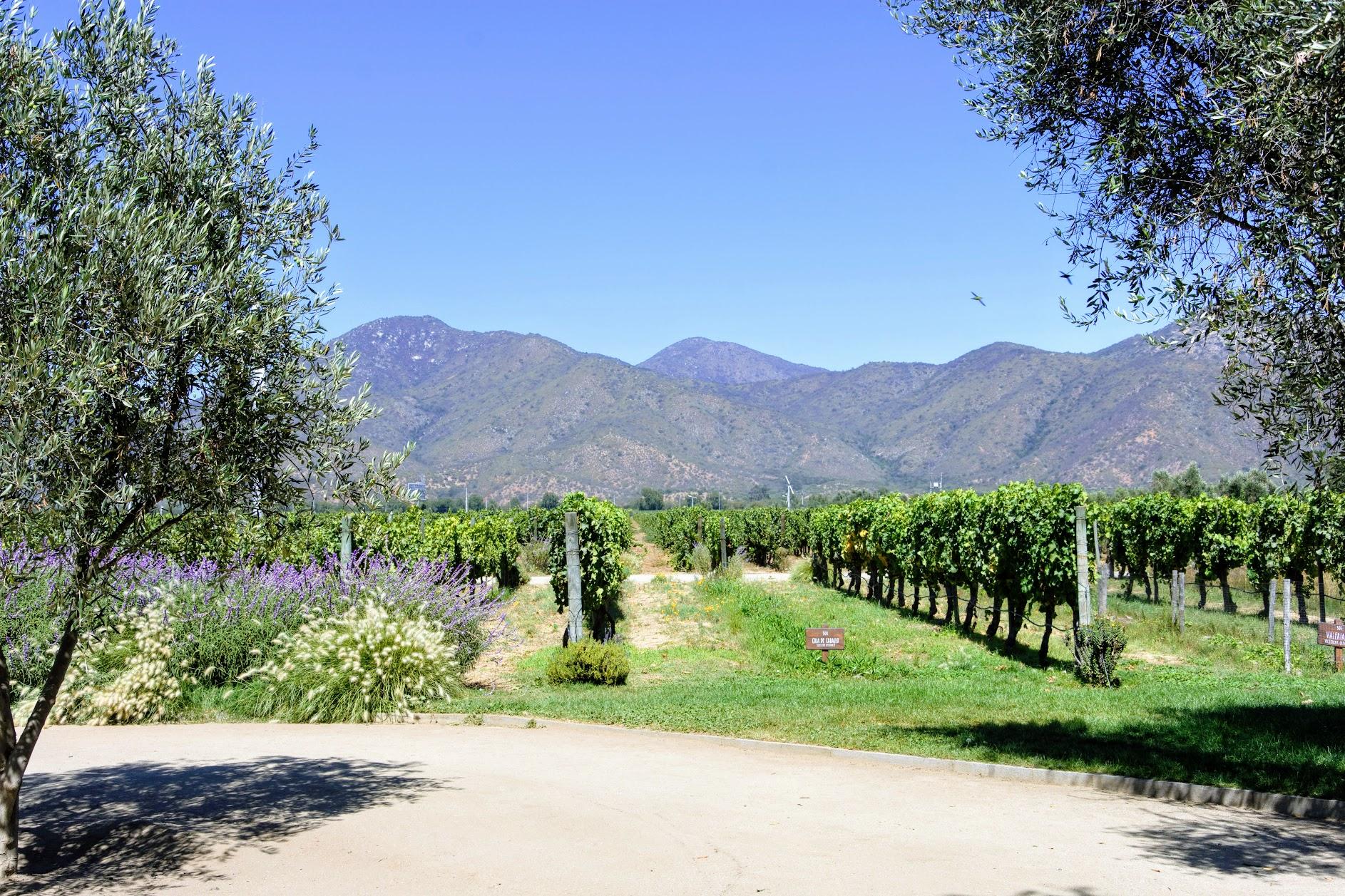 organic vineyard near Santiago