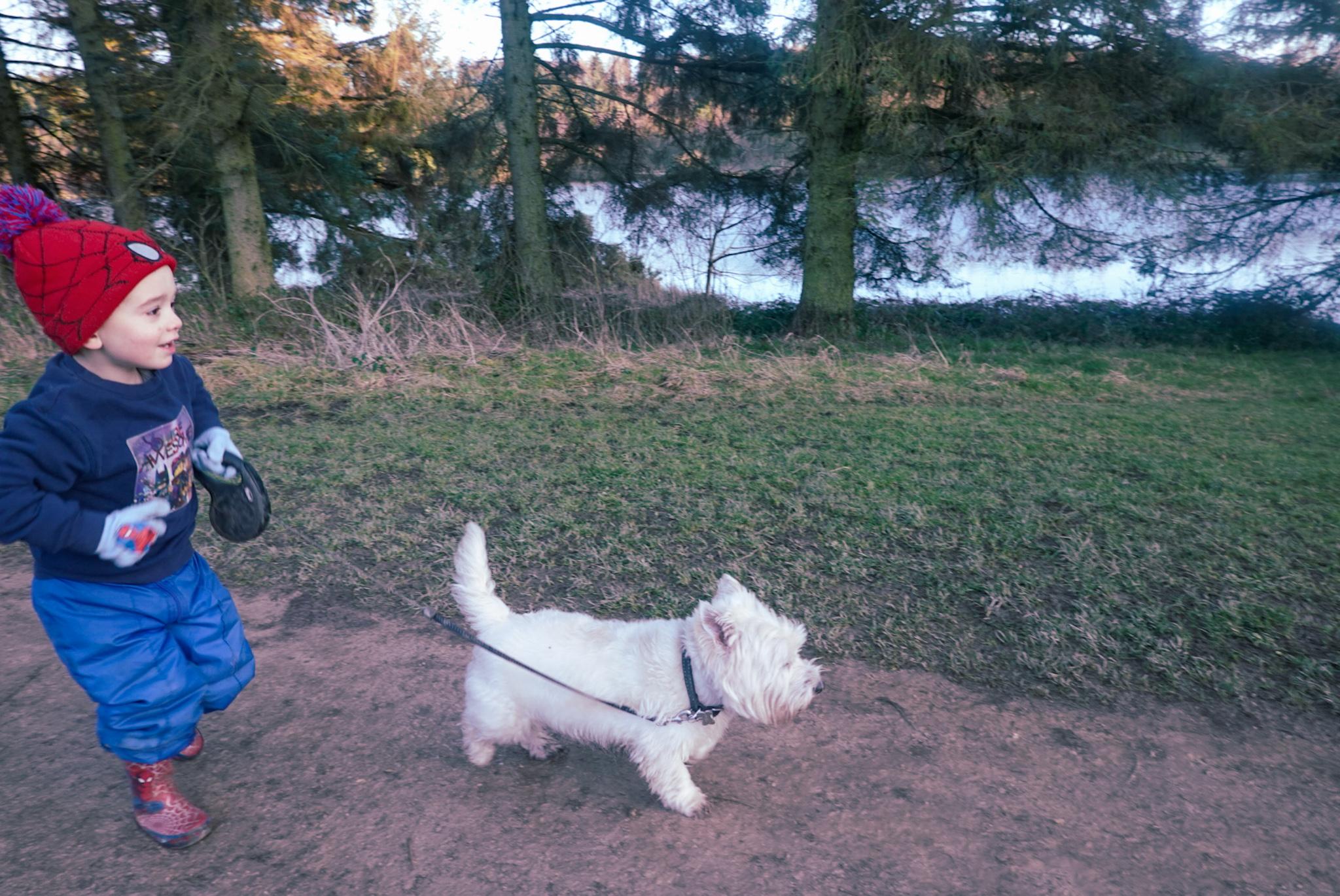 dog friendly walk in North Yorkshire