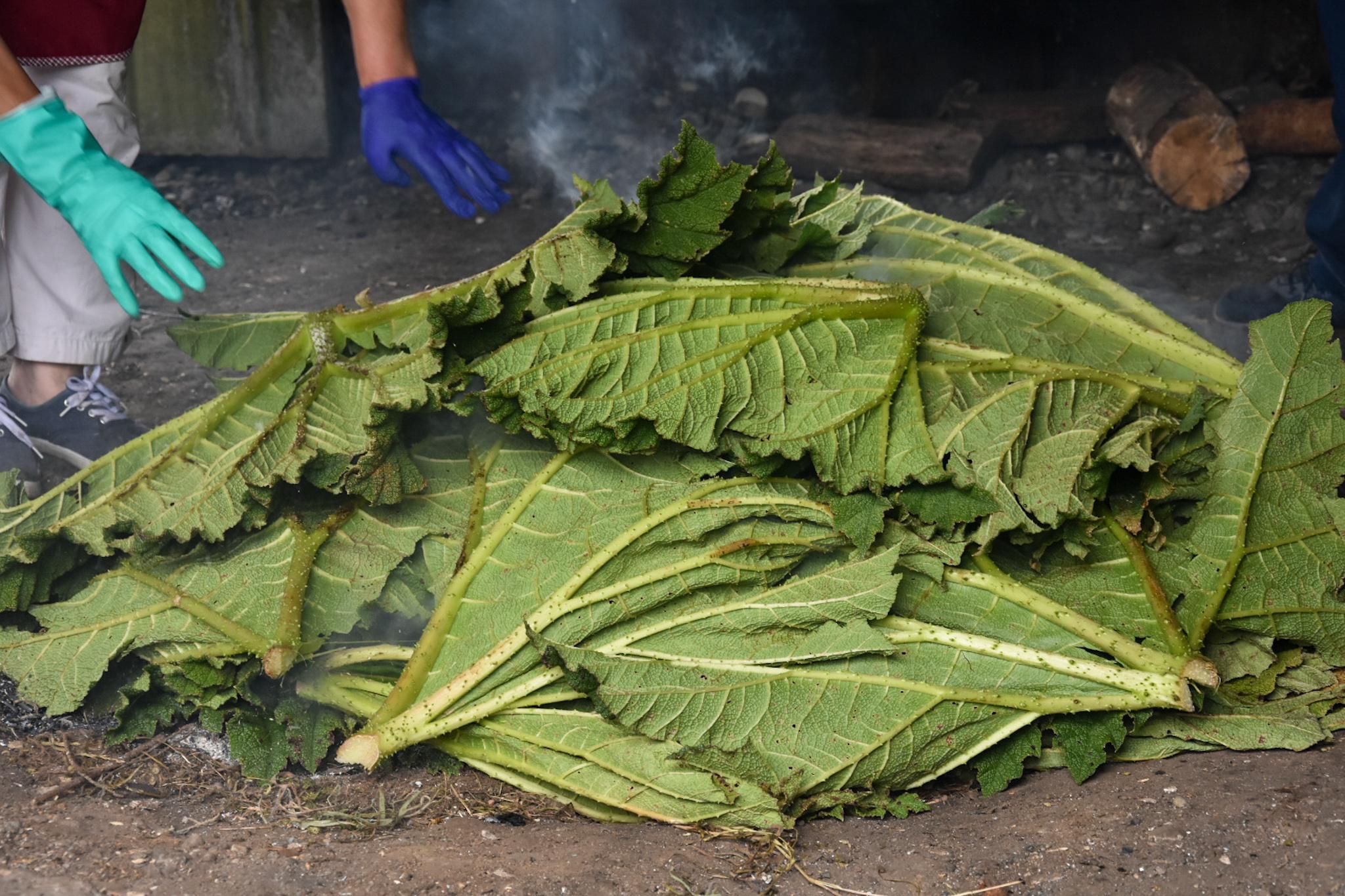 preparing curanto on Chiloe island