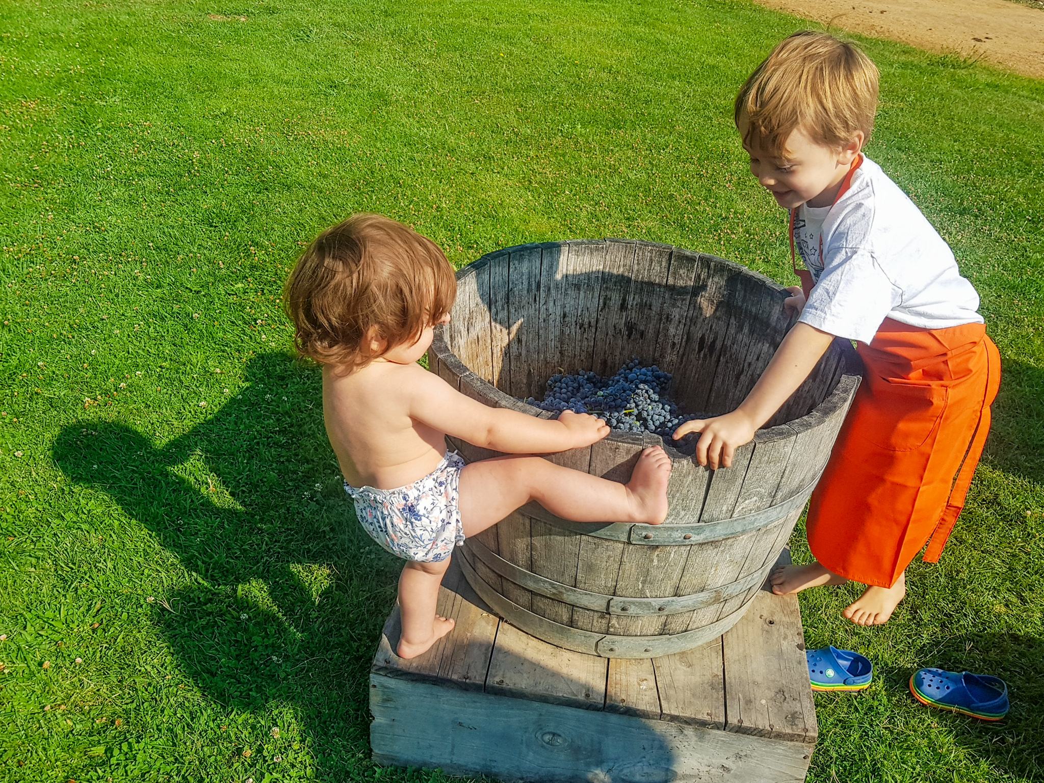 children grape stomping in Chile