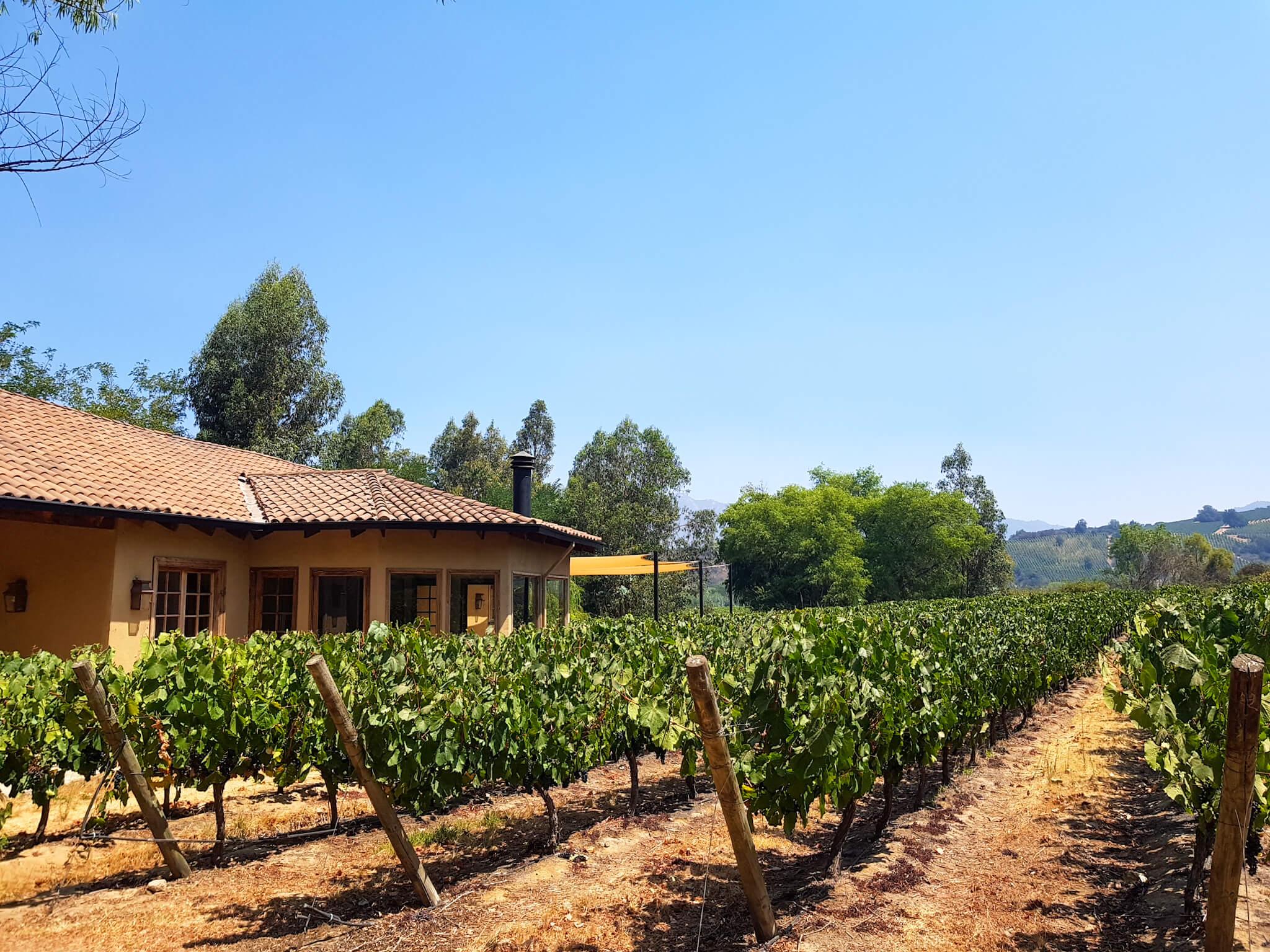 Santa Cruz luxury accommodation within a vineyard