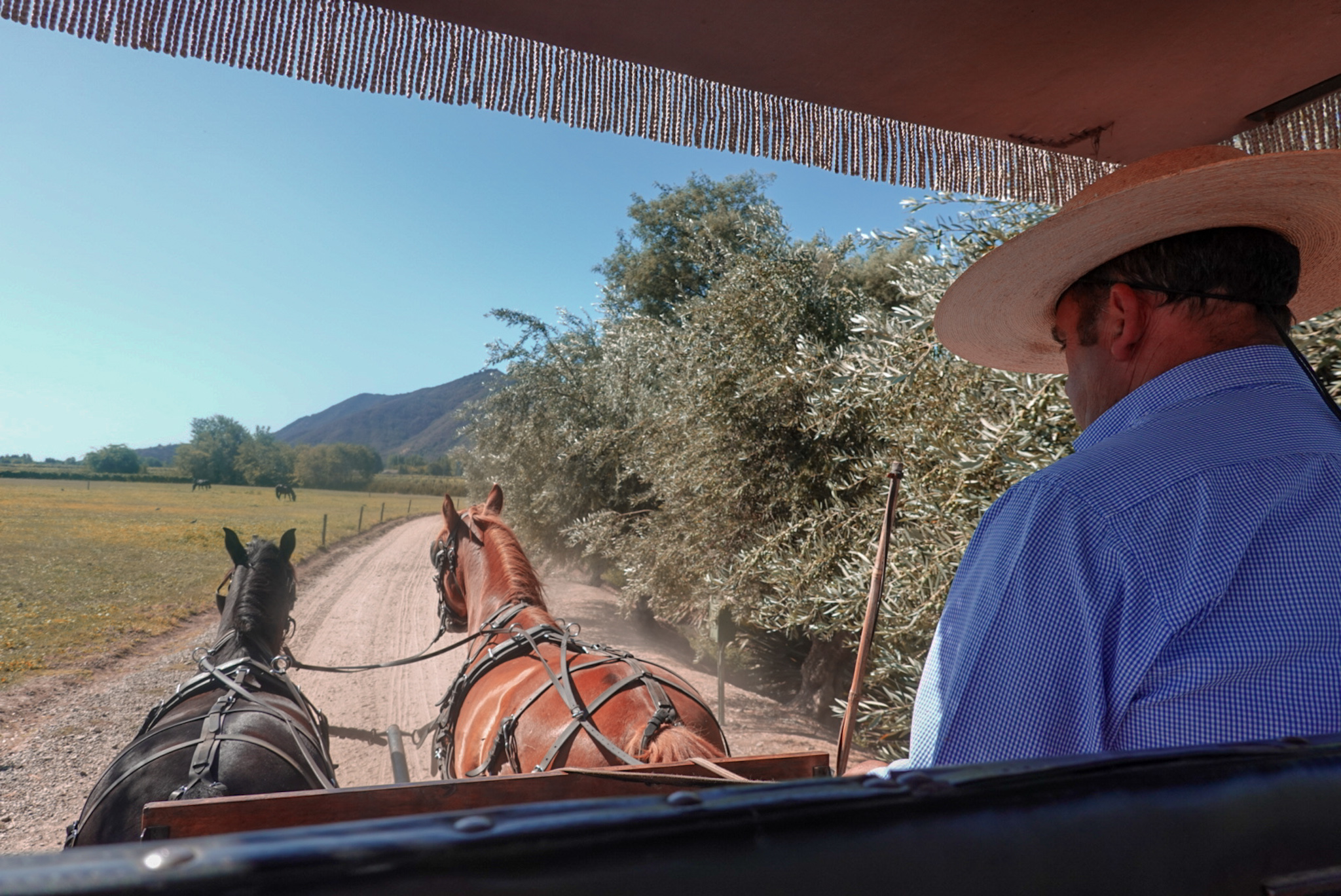 Viu Manent horse drawn carriage tour