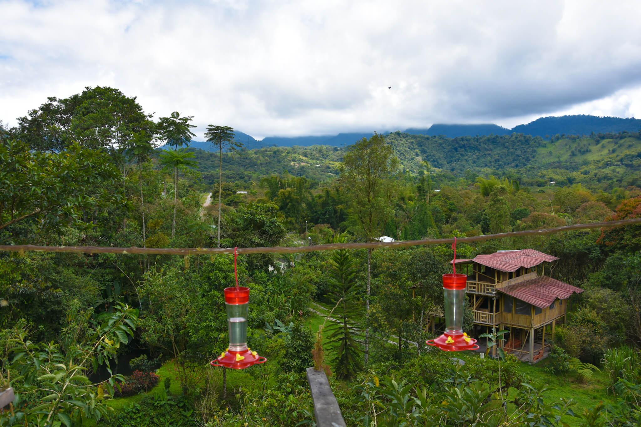 bird watching in Ecuador